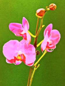 Leon Fontana Pink Orchrid mixed media 225x300 - Gallery