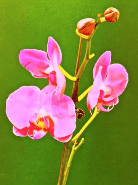 Leon Fontana-Pink orchid-mixed media